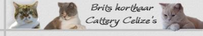 Cattery Celizes link uitwisselen