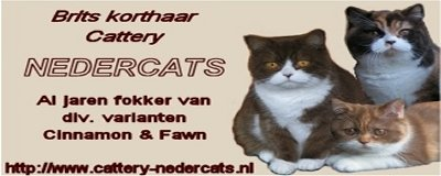 Cattery Nedercats