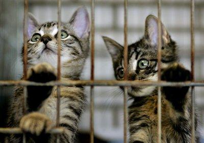 Stop dierenmishandeling